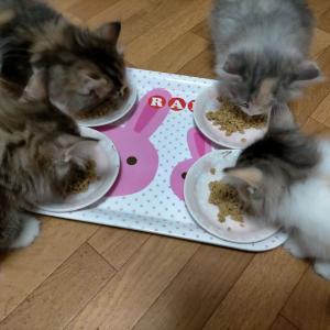 子猫さん日記②