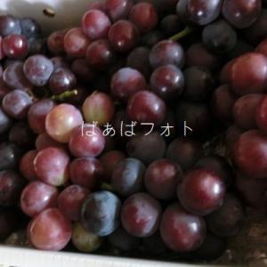 葡萄が届きました