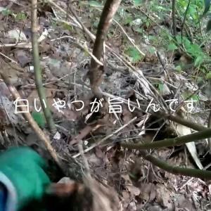 山菜採り、竹の子採りに必要な道具、オススメグッズをご紹介。