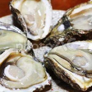 身がデカすぎる牡蠣!?北海道の仙鳳趾産の牡蠣