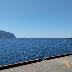 積丹方面の漁港内でボラ?を発見。小サバの群れの姿も。