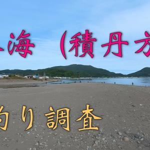 日本海(積丹方面)の鮭を探してきました