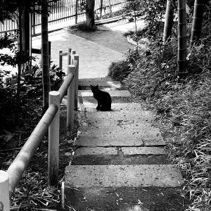 PotteringPhoto&Music - Black Cat