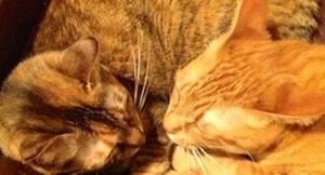 逝ってしまった愛猫たちへ。