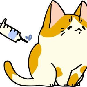 【実録】夫と私のワクチン接種(@_@)♪