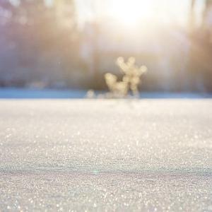 初雪と最近のオススメ。