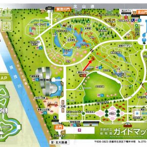 オオモクゲンジ と タイワンモクゲンジ/京都植物園