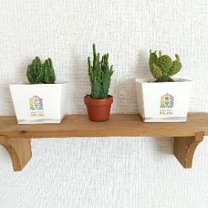 ワクワク学校グッズミニ栽培キットの箱にダイソーのミニサボテン