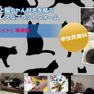 クラウドファウンディング挑戦中! NO CAT NO LIFE