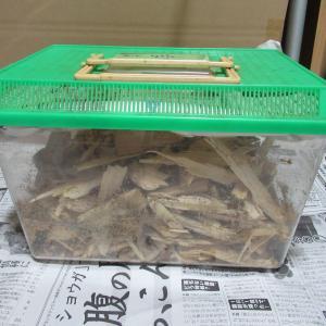 割り出した後の産卵セットの残骸の処理