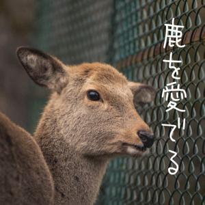 ひたすら鹿を愛でる写真集