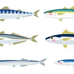 魚のはなし (About fish)