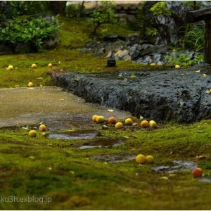 梅漬けの季節