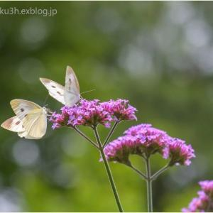 蝶も花と共に