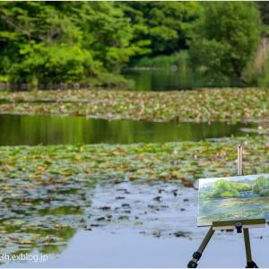 絵のある睡蓮池