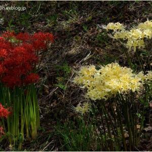 野に咲く赤と白