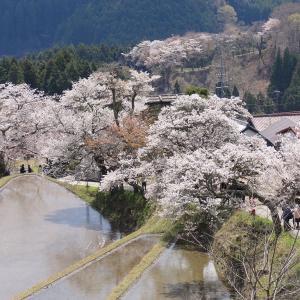 いつか行きたい日本の名所 三多気の桜