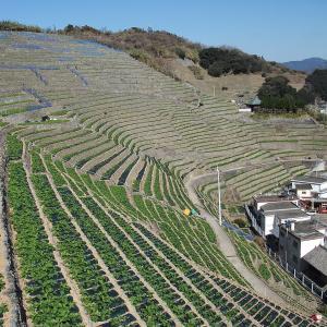 いつか行きたい日本の名所 遊子水荷浦の段畑