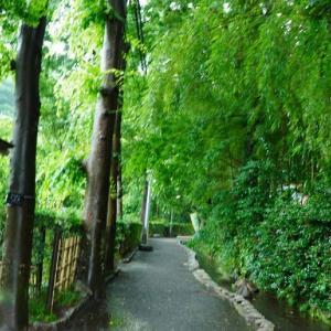 お鷹の道 ②  真姿の池