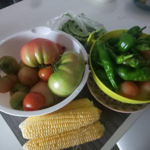 7月第一週収穫! トウモロコシ