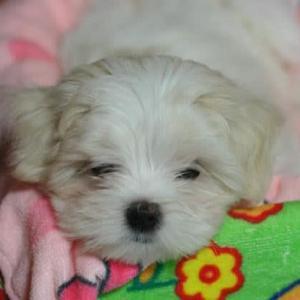 ★ 天使犬七海、うちの子記念日 💛
