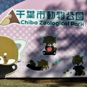 ★ 千葉市動物公園 ー その2 & 七海「チーターぶっ飛び」の由来...💡