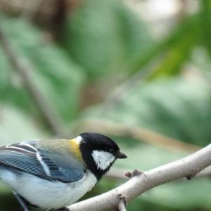 野鳥撮影に超便利 PowerShotSX60HSのキャッチAF