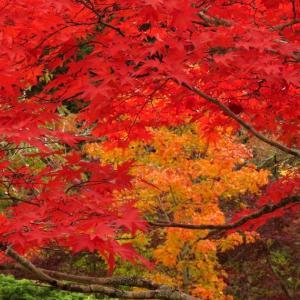 中野ダム公園の紅葉は見頃