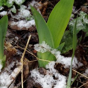 函館の平地では珍しい4月の雪