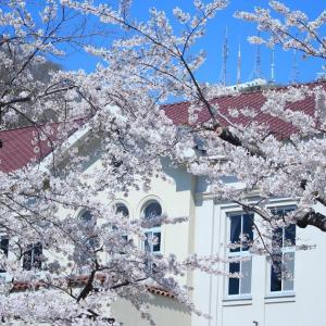 函館公園花見から函館山へ今年初トレッキング