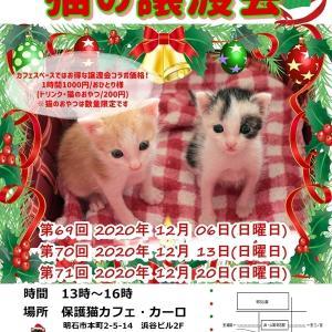 本日、兵庫県明石市にて譲渡会です