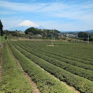 茶畑と富士山02