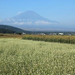 忍野 夏の富士山