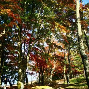 昼 山中湖の紅葉祭り