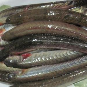 lẩu cá kèo(ドジョウ鍋)を食べに行った話