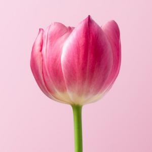 【体外受精】凍結胚移植(胚盤胞移植)の当日の流れと移植1回目と2回目の違い