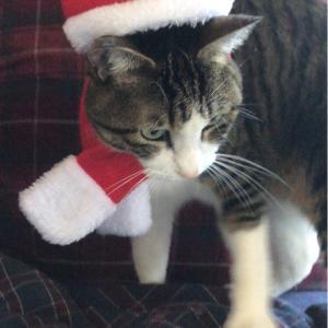 クリスマスが待ちきれないですぅ❣️