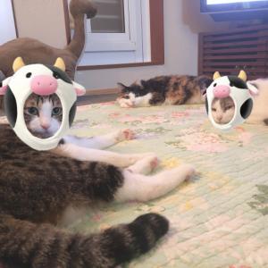 猫も牛になる年ですぅ