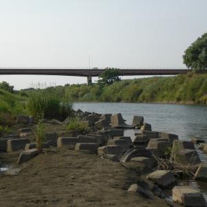 荒川中流域ナマズ釣り
