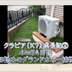 YouTube投稿『クラピア成長記②』