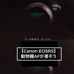 【Canon EOSR5】動物瞳AF性能が凄そう
