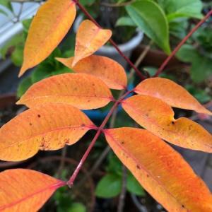 箱庭でも秋を感じます♪