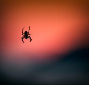 蜘蛛からの知らせ?