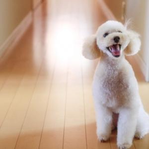 新築マイホームで犬を飼う準備をしよう!犬と暮らす家の計画。