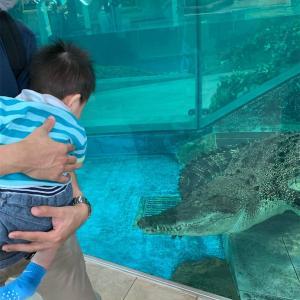 生きているミュージアム「ニフレル」は子連れにおすすめしたい水族館