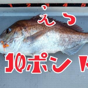タイラバ 釣行16回目 愛媛県松山沖