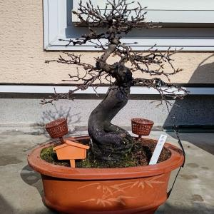 頭でっかちの老爺柿の頭を整理