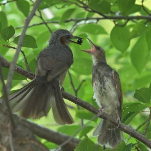 野鳥カメラマンが見向きもしない鳥