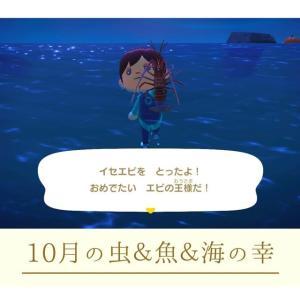 【あつ森攻略】10月から採れる虫&魚&海の幸まとめ