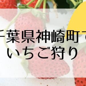 【千葉県神崎町でいちご狩り】食べ比べができるストロベリーヴィレッジこうざき
